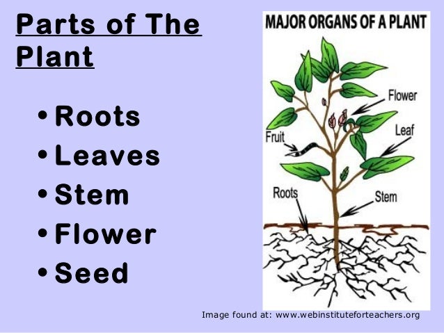 Powerpoint plant parts for science gr 5.