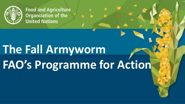 The Fall Armyworm FAO's Programme for Action