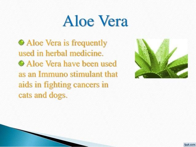 Power Point Presentation Herbal Medicines Aloe Vera
