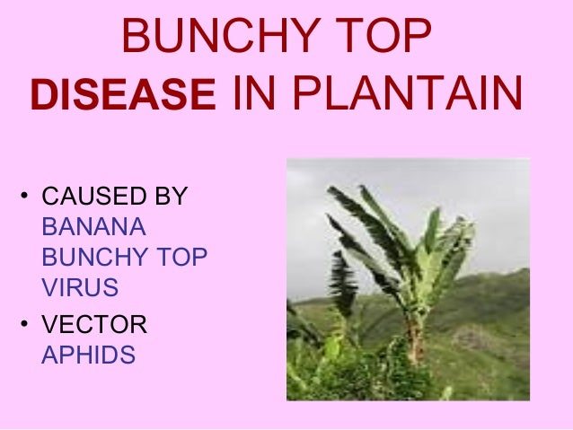 Scouting for plant diseases ppt video online download.