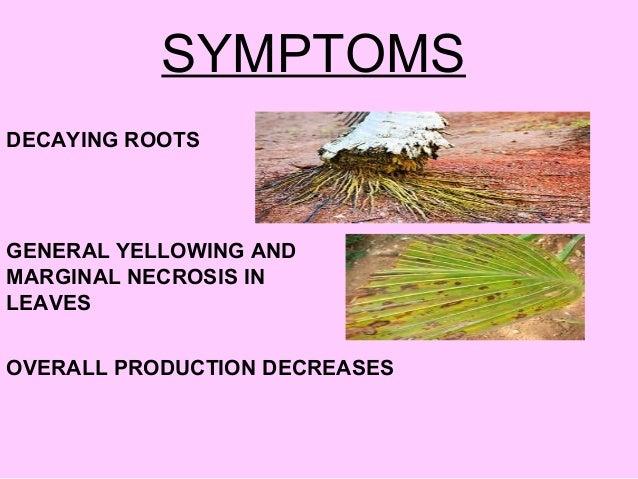 Principles of plant disease management.