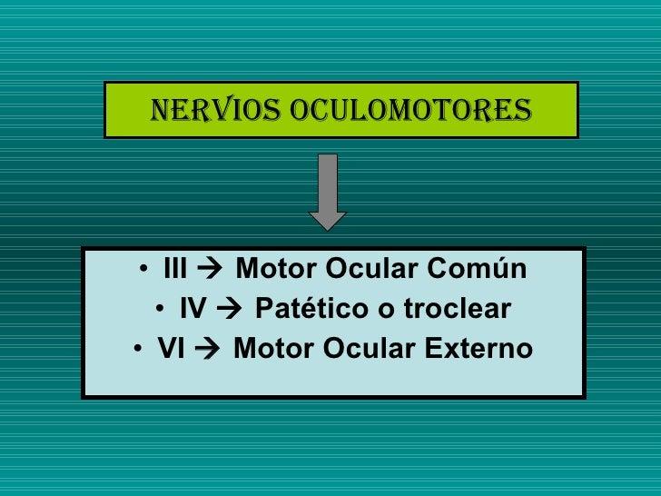 Nervios Oculomotores <ul><li>III    Motor Ocular Común </li></ul><ul><li>IV    Patético o troclear </li></ul><ul><li>VI ...