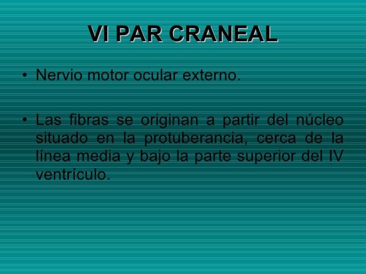 VI PAR CRANEAL <ul><li>Nervio motor ocular externo. </li></ul><ul><li>Las fibras se originan a partir del núcleo situado e...