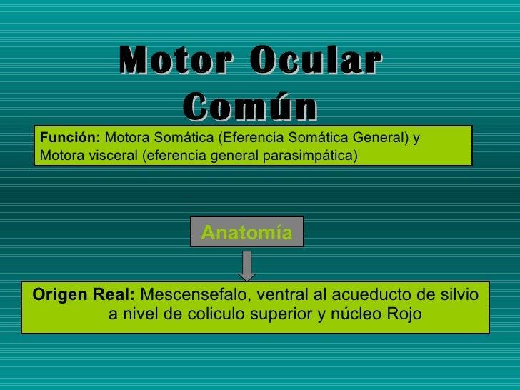 <ul><li>Origen Real:  Mescensefalo, ventral al acueducto de silvio a nivel de coliculo superior y núcleo Rojo </li></ul>An...