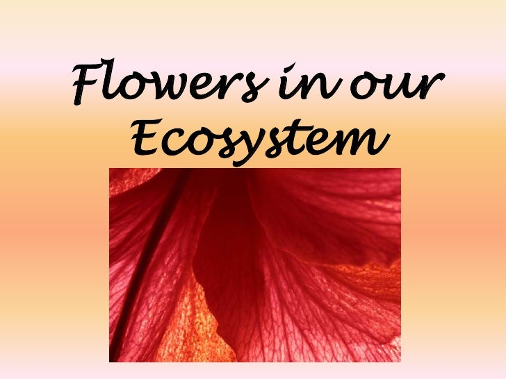 Flowers in our Ecosystem<br />