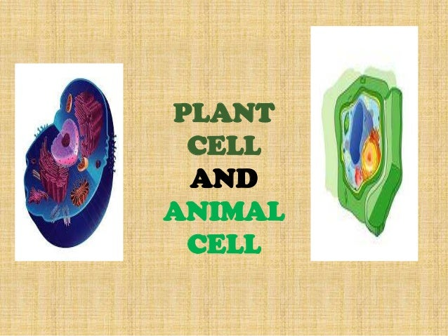 PLANT CELL AND ANIMAL CELL