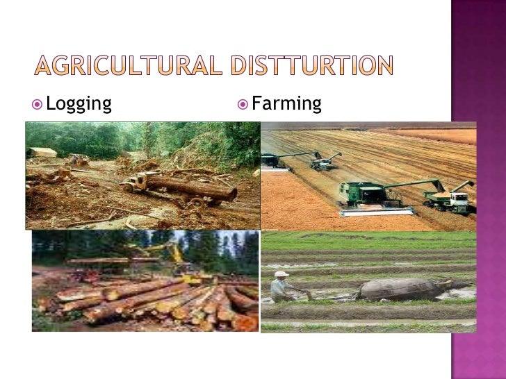 Agricultural Distturtion<br />Logging<br />Farming<br />