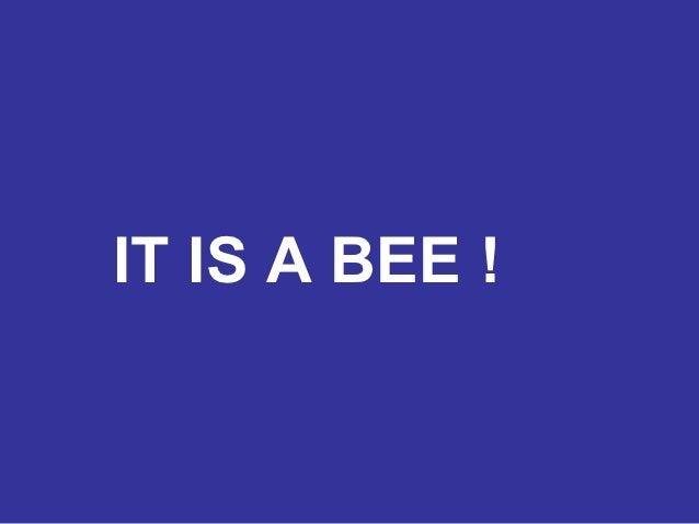 IT IS A BEE !