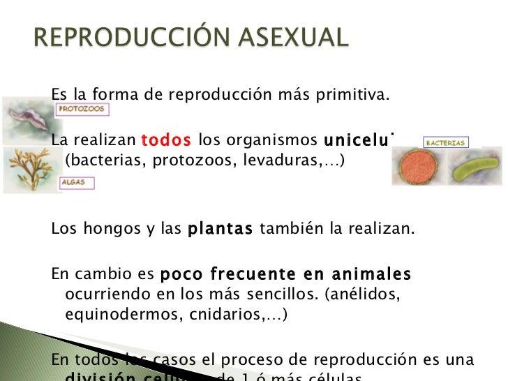 Cnidarios reproduccion asexual de las plantas
