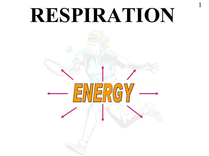 RESPIRATION ENERGY 1