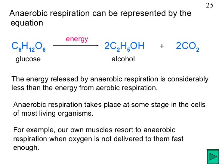 word equation for anaerobic cell respiration in humans