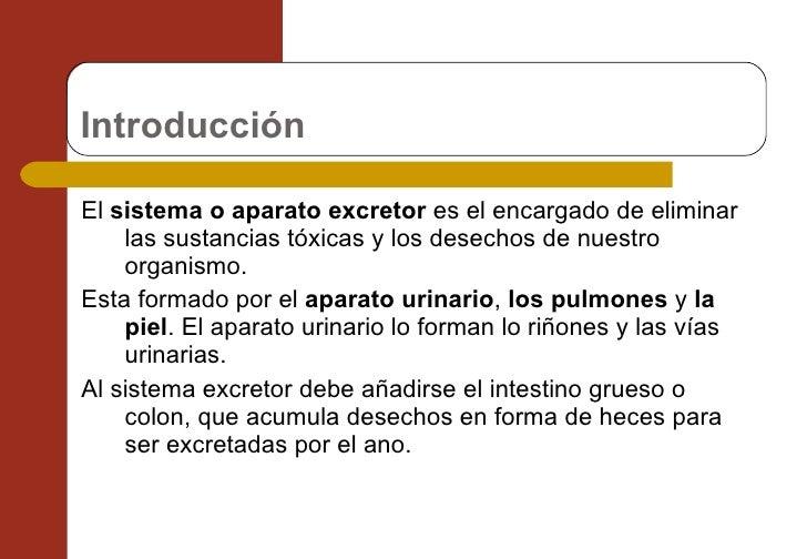 Sistema urinario Slide 2