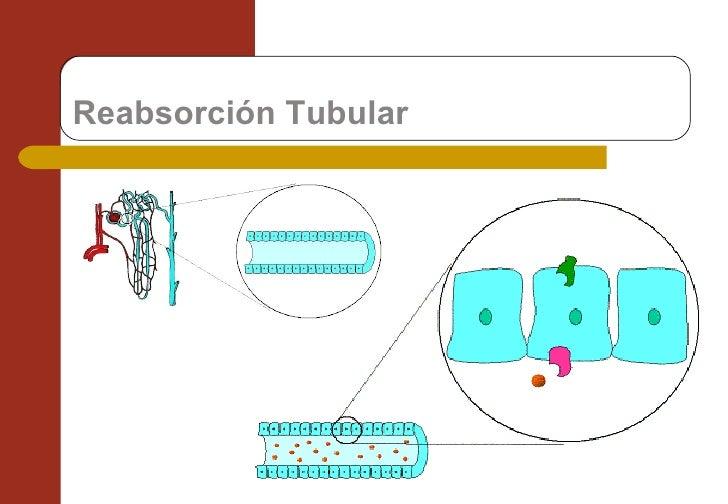 Reabsorción Tubular