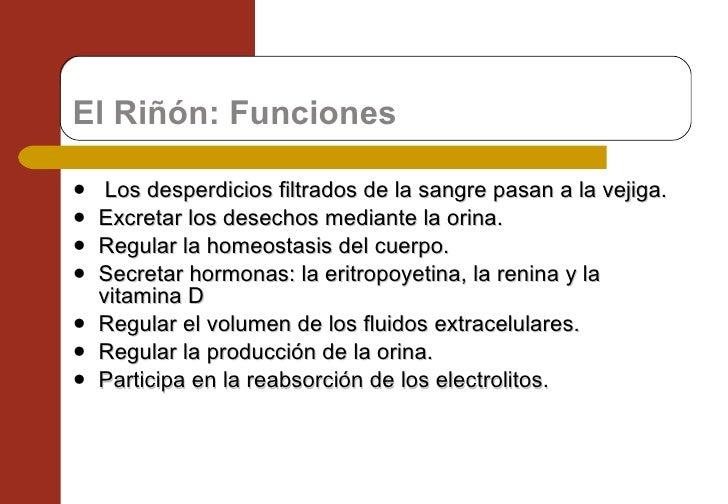 El Riñón: Funciones <ul><li> Los desperdicios filtrados de la sangre pasan a la vejiga. </li></ul><ul><li>Excretar los de...