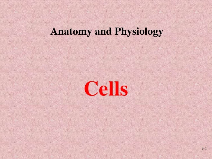 3-1<br />Anatomy and Physiology<br />Cells<br />
