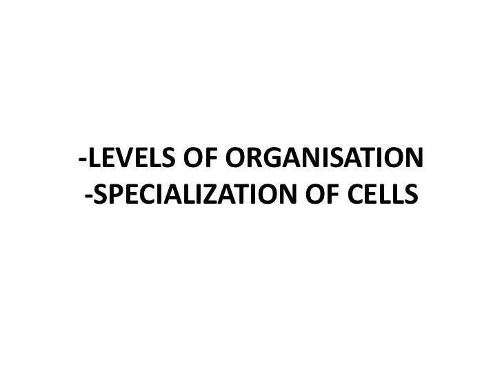 Powerpoint specialization of cells