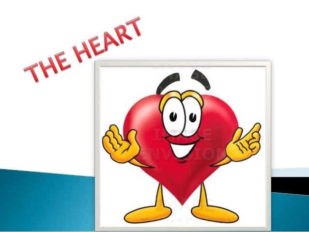 The heart is located a little to the left of the middle of your chest, and is about the size of your fist.