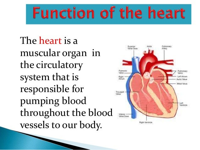 The heart ppt 7 ccuart Images