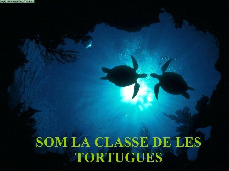 SOM LA CLASSE DE LES TORTUGUES