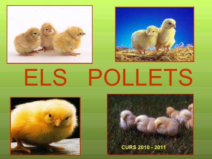 ELS  POLLETS CURS 2010 - 2011