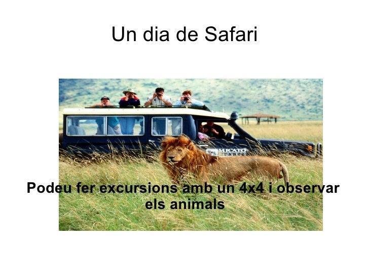 Un dia de Safari     Podeu fer excursions amb un 4x4 i observar                 els animals