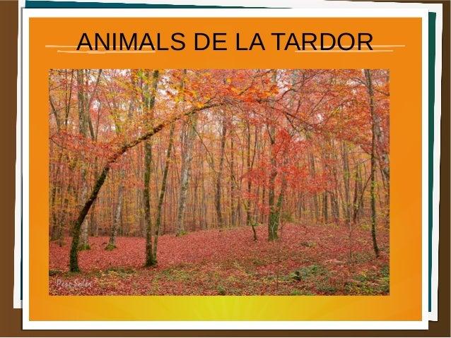 ANIMALS DE LA TARDOR