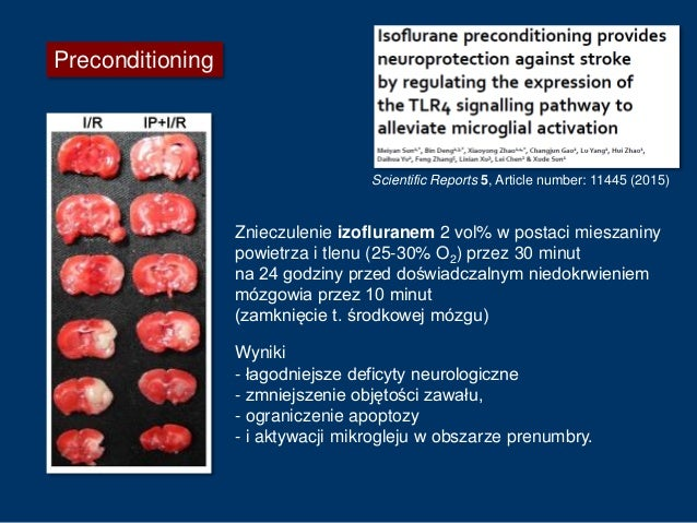 Preconditioning Znieczulenie sewofluranem 2,7 vol% przez 45 minut przed doświadczalnym niedokrwieniem mózgowia. Dokonywano...