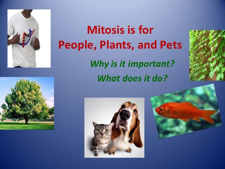 Mitosis is forPeople, Plants, and Pets      Why is it important?       What does it do?