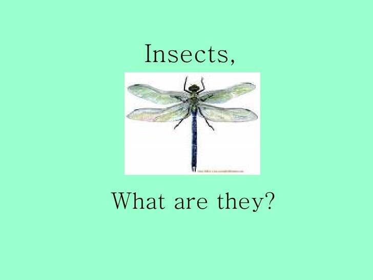 Insects,     What are they?