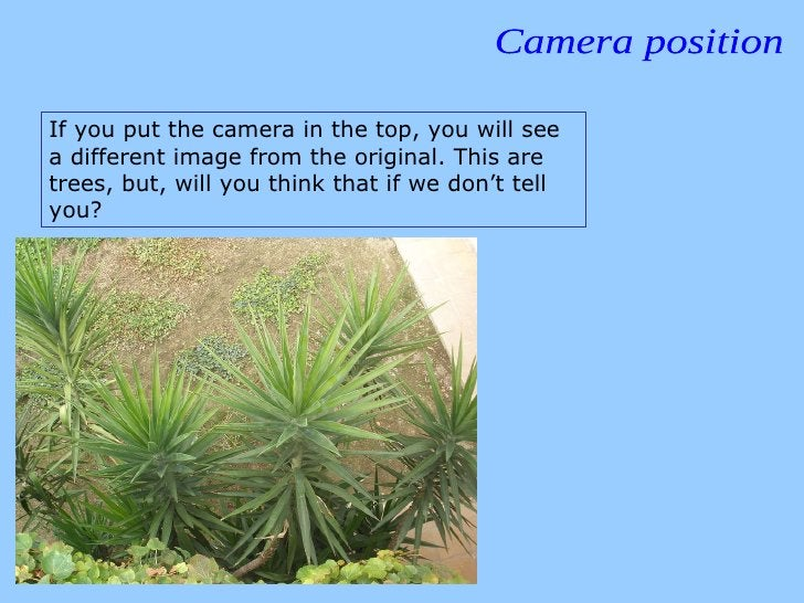 Camera position If you put the camera in the top, you will see a different image from the original. This are trees, but, w...
