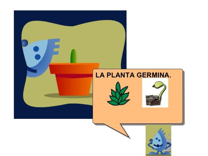 LA PLANTA GERMINA.