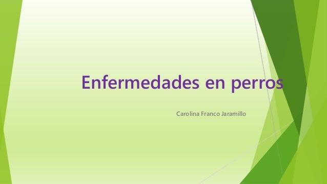 Enfermedades en perros Carolina Franco Jaramillo