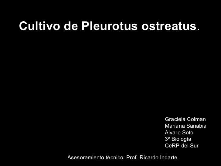 Cultivo de Pleurotus ostreatus . Graciela Colman Mariana Sanabia Álvaro Soto 3º Biología CeRP del Sur Asesoramiento técnic...
