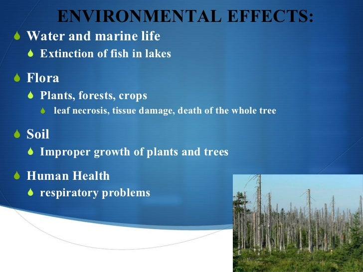 effects of acid rain on forest and aquatic life An indirect consequence of acid rain is that toxic metals dissolved in water are absorbed by fruits, vegetables and animal tissues the forests are most affected by soil degradation phenomena, under action of acid rain because: consist perennial, that integrates life cycle impact toxins forest soils are formed generally.