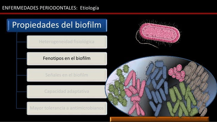 ENFERMEDADES PERIODONTALES: Etiología   Propiedades del biofilm              Heterogeneidad fisiológica                Fen...
