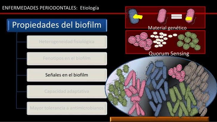 ENFERMEDADES PERIODONTALES: Etiología   Propiedades del biofilm                     Material genético                     ...