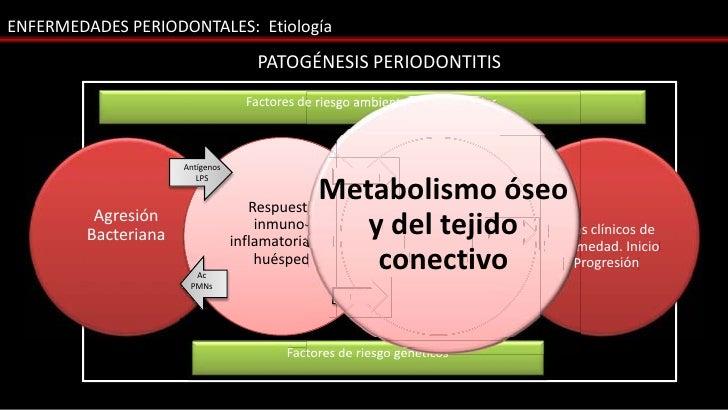 ENFERMEDADES PERIODONTALES: Etiología                                      PATOGÉNESIS PERIODONTITIS                      ...