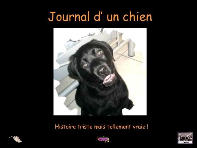 Journal d' un chienHistoire triste mais tellement vraie !