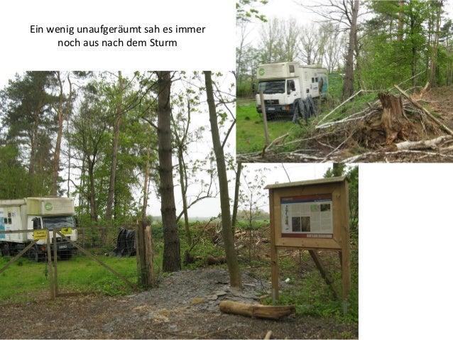 Im Wald war man schon weiter mit den Folgen des Sturms