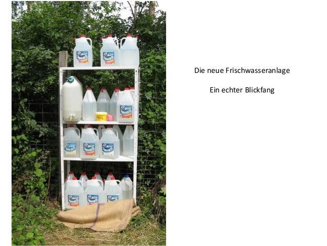 Bei langsam sinkendem Wasserstand wurden in sturmgeschädigten Bereichen Rekultivierungsmaßnahmen durchgeführt, hier mit Su...