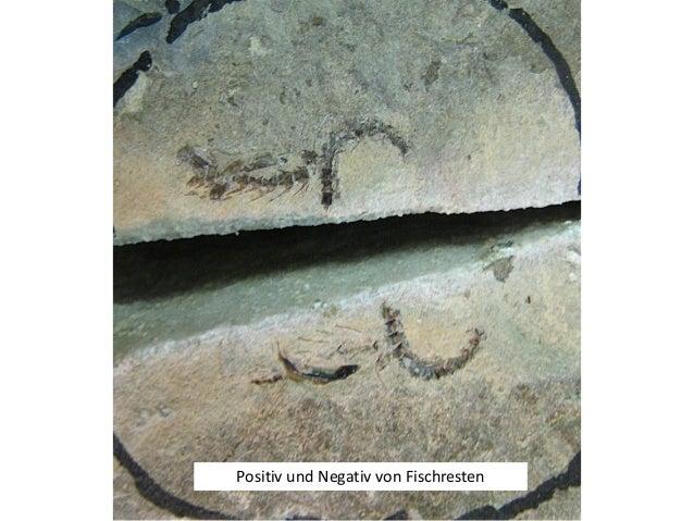 Und dann dieser Wirbel, es könnte ein Wirbel eines Plesiosauriers sein