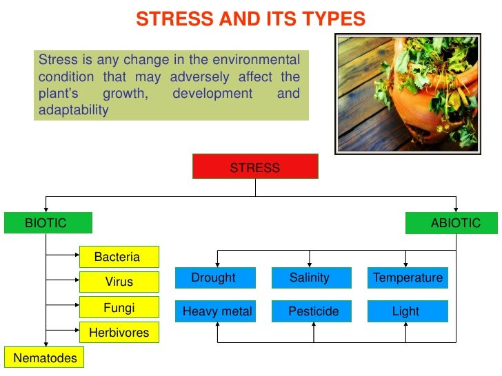 abiotic stres effect on plant by