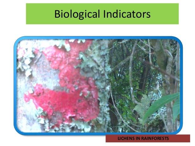 Biological Indicators             LICHENS IN RAINFORESTS