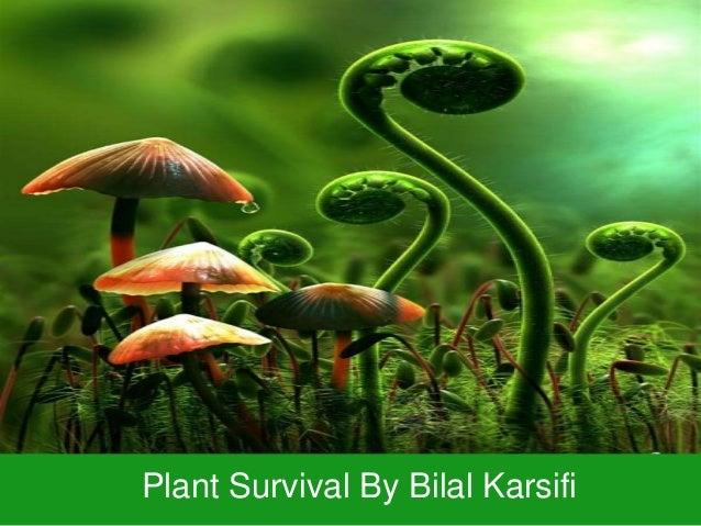 Plant Survival By Bilal Karsifi