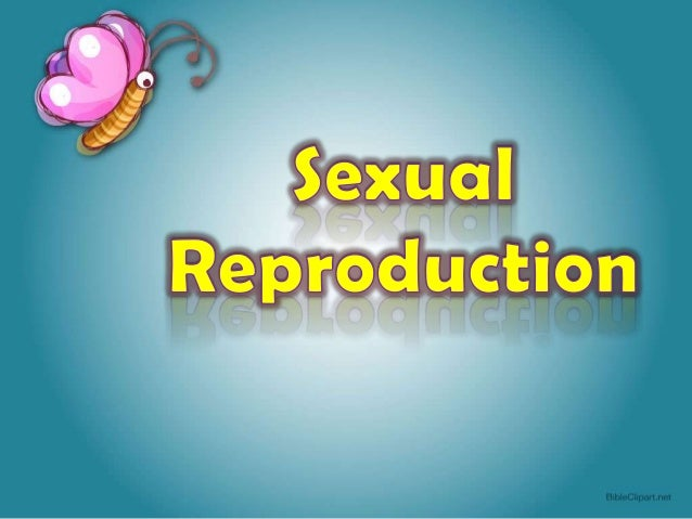 • The stamen is the male reproductive organ. It consists of a stalk called the filament and an ovoid structure at its tip ...