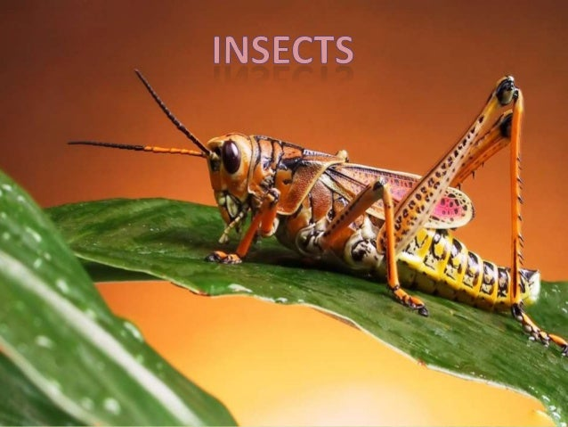 Insects have three body parts: a head, a thorax and an abdomen