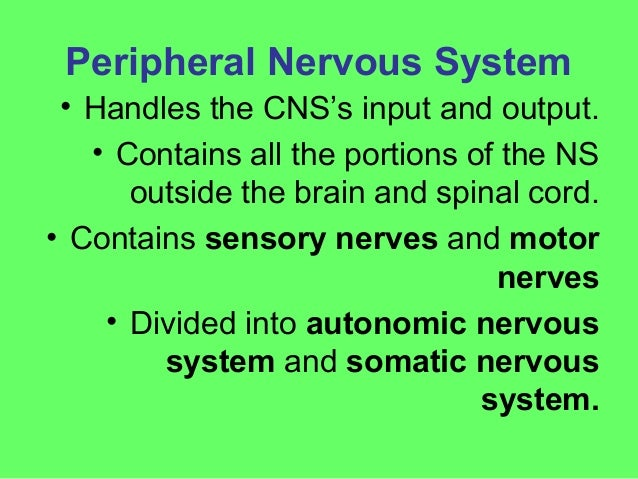 autonomic nervous system Ppt