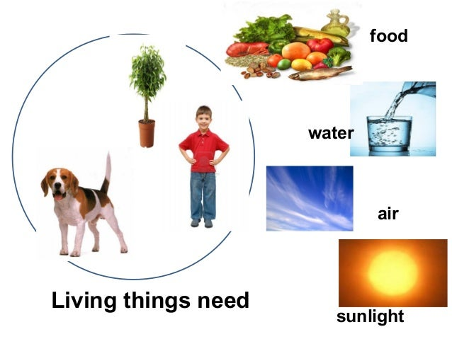 Living Things And Non Living Things 44224828 on Needs And Characteristics Of Living Things 1