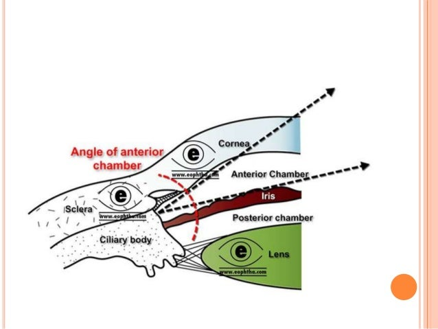 Anatomy Of Anterior Chamber