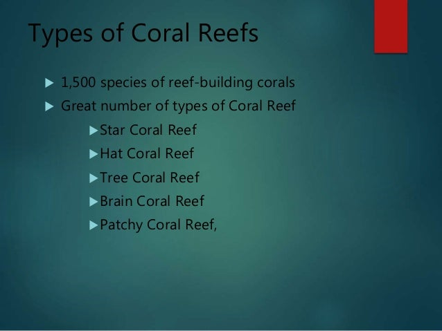 Free powerpoint presentations about coral reefs for kids.